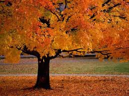 autumn tree leaves falling